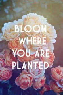 bloom where planted